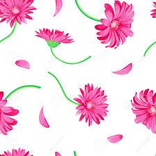 margarita clip art margarita de gerbera rosa en el fondo blanco ilustraciones