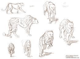 daily animal sketch u2013 big cats u2013 last of the polar bears