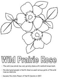 united states symbols coloring pages minnesota state flower coloring page pink u0026 white lady u0027s slipper