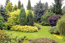 3 how to s when caring for evergreen trees precision tree