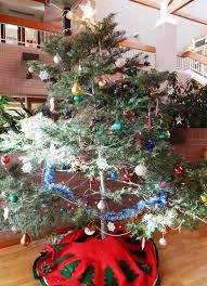 christmas trees provide opportunities for thinning n ariz