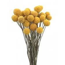 billy balls billy balls gold 2 oz bunch new harvest