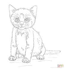kitten coloring free printable coloring pages