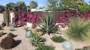Cactus Garden Ideas Backyard Cactus Garden Landscaping Ideas Satuska Co Beautiful
