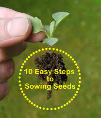 gardening for beginners 10 easy steps to sowing seeds dengarden