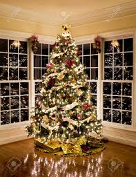 28 botanical name for christmas tree office christmas trees