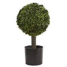 topiary trees topiaries the home depot