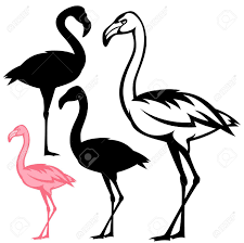 pink flamingo stock photos royalty free pink flamingo images and