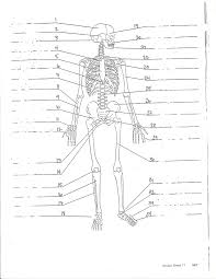 Anatomy Directional Terms Worksheet Physio