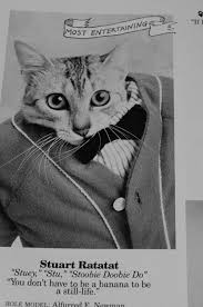 cat high the yearbook cat high a yearbook for cats ned hardy ned hardy
