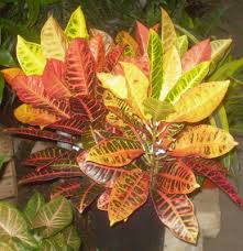 plants are the strangest people funeral plants part ii for the