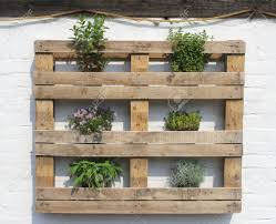 wooden rack with fresh herbs at a white wall stock photo picture