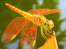 dragonfly wallpaper android apps on google play