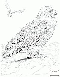 birds owls funny little owl owls coloring pages coloringbooks7 com