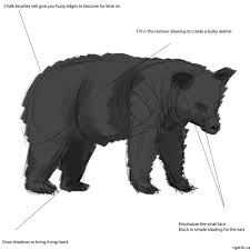 how to draw a bear use these simple steps to make neat bear