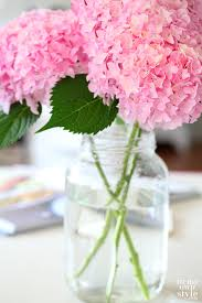pink hydrangea how to cut hydrangeas so they won t wilt in my own style