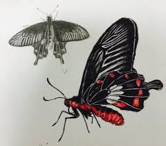 butterflysketch explore butterflysketch on deviantart