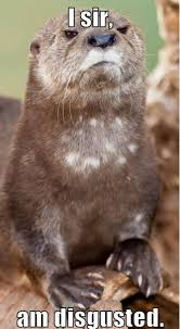 Otter Meme - 18 otter memes that will make you lol azula for the love of oceans