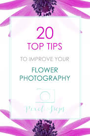 20 flower photography tips to improve your flower photos
