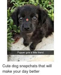 Cute Dog Memes - 25 best memes about cute dog cute dog memes