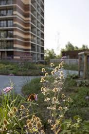 Urban Garden Amsterdam Roof Gardens Nieuw Waterlandplein Atelier Pro Architects
