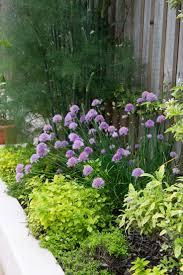 wildtype native plant nursery 59 best echinacea pallida images on pinterest native plants