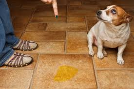 best flooring for dogs pros and cons you must consider
