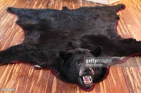 bearskin rug stock photos and pictures getty images
