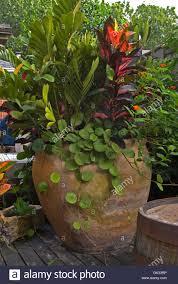 planter with mix of plant types hoya alternanthera josephs coat