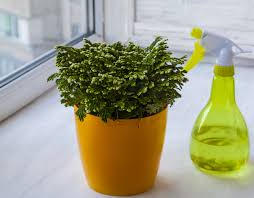 keeping houseplants happy and healthy horticulturehorticulture