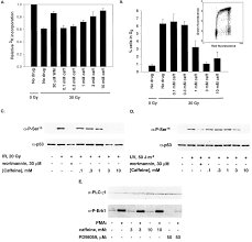 inhibition of atm and atr kinase activities by the