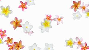 flower background animation frangipani plumeria seamless