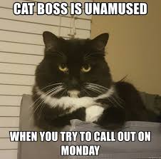 Unamused Cat Meme - cat boss is unamused when you try to call out on monday cat boss
