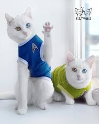 Twlin Sis These Unusual Cat Twins Are The Prettiest Cats On The Internet
