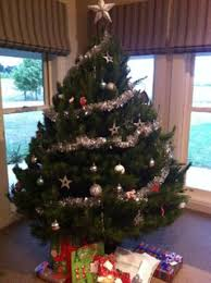 rotary club of parramatta city christmas trees west pennant