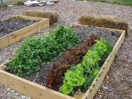 front yard vegetable garden plants vegetable garden plants
