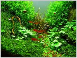 Aquascape Aquascaping Is So Advanced It U0027s Actually Simple To Create And