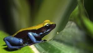 what animals show commensalism in the rain forest sciencing