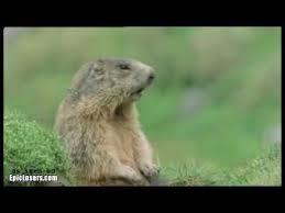 Allan Meme - obnoxious groundhog youtube