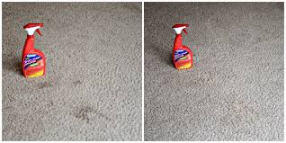 Rug Doctor Urine Eliminator I Got A Jump Start On My Spring Cleaning Thanks To Rug Doctor