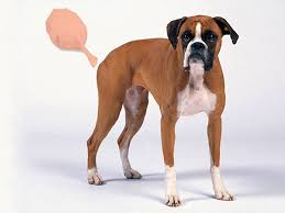 boxer dog gum problems what to feed to stop dog farts petmd