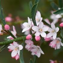 Garden Express Summer Catalogue - trees u0026 shrubs in gardening plants u0026 bulbs daily express