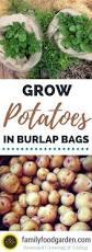 grow potatoes in burlap
