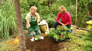 planting a fall vegetable garden produced by tagawa gardens a