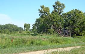 prairie oak ecosystems of the oak savanna mississippi national river and recreation area u s