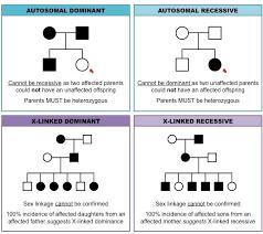 pedigree charts inheritance cheat sheet genetics pinterest