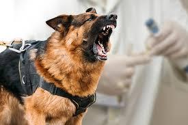 dog euthanasia dog bite euthanasia philadelphia dog bite lawyer