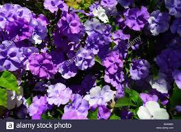 flowers san diego yesterday today and tomorrow flowers balboa park san diego