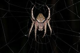 spider web transparent background watch a spider weave an intricate web in less than 5 minutes