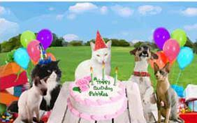 cat birthday cards cards